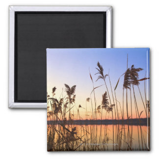 Plant Silhouette by Lakeside sunset 2 Inch Square Magnet