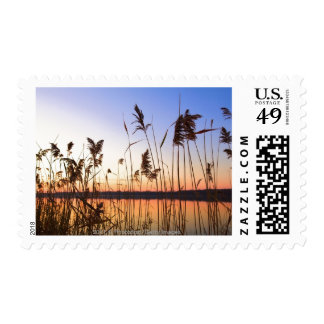 Plant Silhouette by Lakeside sunset Postage