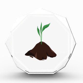 Plant Sprout Award