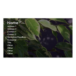 Plant Variegated Benjamina Double-Sided Standard Business Cards (Pack Of 100)