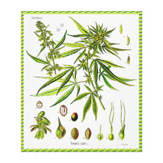 Plant Vintage Botany Drawing Wrapped Canvas Canvas Prints