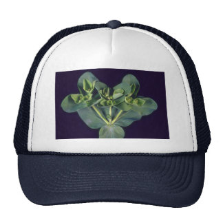Plant Weedy Bouquet Trucker Hat