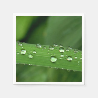 Plant with Drops Standard Cocktail Napkin