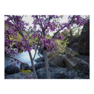 plant with purple blossoms near bear hole chico poster