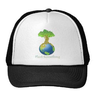 Planta algo gorras