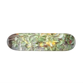 Planta anaranjada china maravillosa skate board