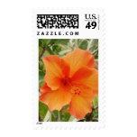 planta anaranjada del hibisco de Hawaii Envio
