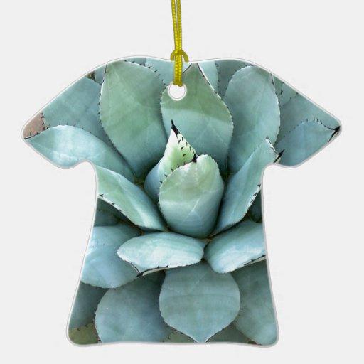 Planta azul del agavo adorno para reyes