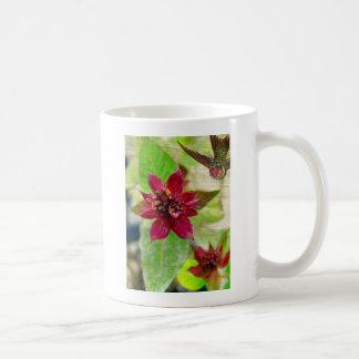 Planta bonita 2 taza de café