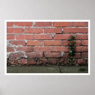 Planta bonita de la pared posters