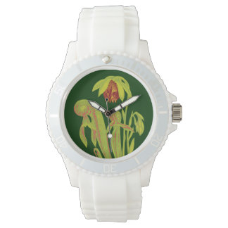 Planta carnívora botánica de la cobra relojes
