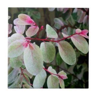 planta colorida del snowbush azulejo cuadrado pequeño