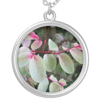 planta colorida del snowbush colgante redondo