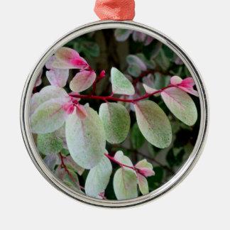 planta colorida del snowbush adornos