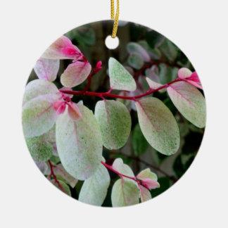 planta colorida del snowbush ornamento para reyes magos