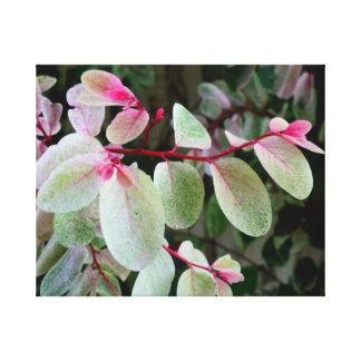 planta colorida del snowbush impresiones en lona estiradas
