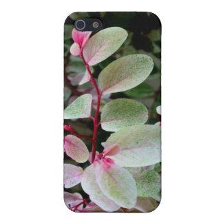 planta colorida del snowbush iPhone 5 fundas
