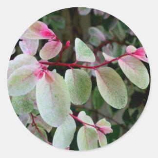 planta colorida del snowbush pegatinas redondas