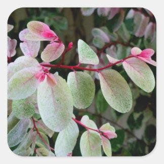 planta colorida del snowbush colcomanias cuadradass