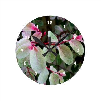 planta colorida del snowbush reloj redondo mediano