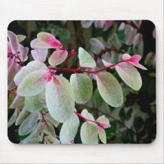 planta colorida del snowbush tapete de ratón