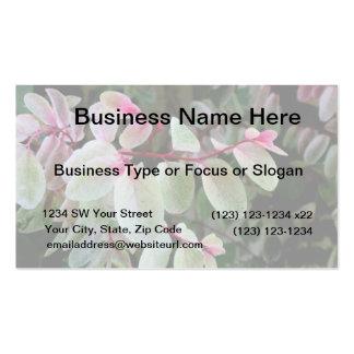 planta colorida del snowbush tarjeta personal