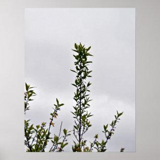 Planta contra el cielo nublado posters