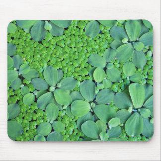 Planta de agua mouse pad