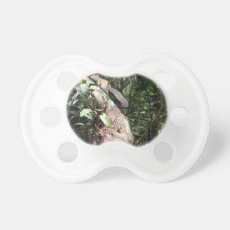 planta de aire en árbol con la ocultación de la ar chupetes para bebés