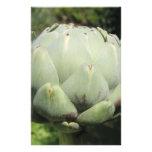 Planta de alcachofa tarjetón