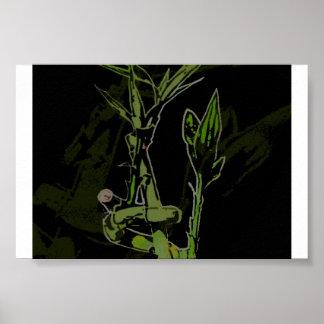 Planta de bambú póster