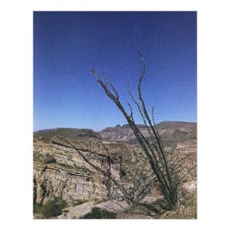 Planta de desierto 01