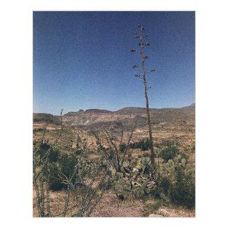 Planta de desierto 02