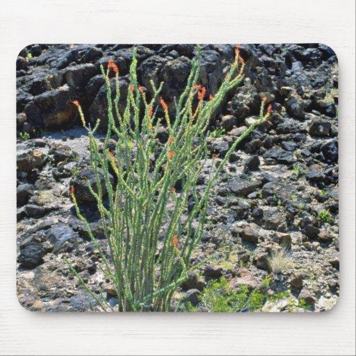 Planta de desierto floreciente alfombrilla de raton