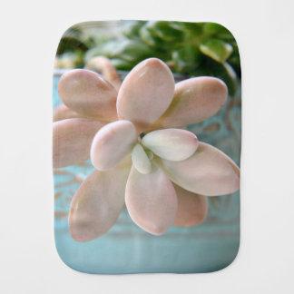 Planta de haba rosada suculenta de jalea de Sedum Paños Para Bebé
