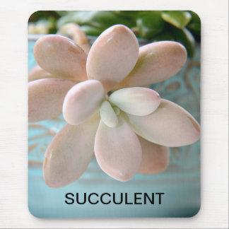 Planta de haba rosada suculenta de jalea de Sedum