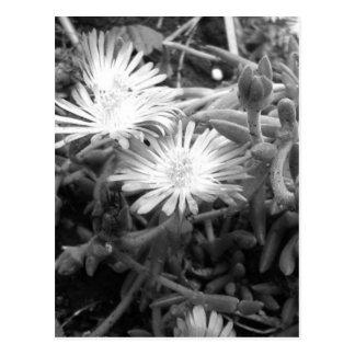Planta de hielo en blanco y negro postales