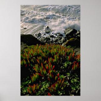 Planta de hielo en la playa de Presidio, San Franc Impresiones