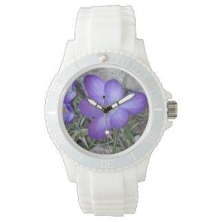 Planta de jardín floreciente del azafrán relojes