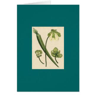 Planta de jarra del flava de H Andrews - de Tarjeta De Felicitación