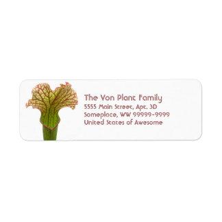 Planta de jarra del Sarracenia Etiquetas De Remite
