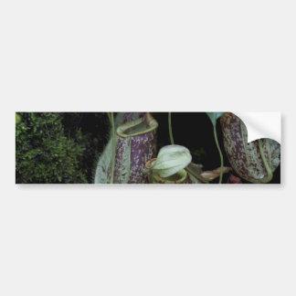 Planta de jarra en jardín nacional de la orquídea pegatina para auto