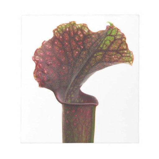 Planta de jarra rojo oscuro bloc de notas