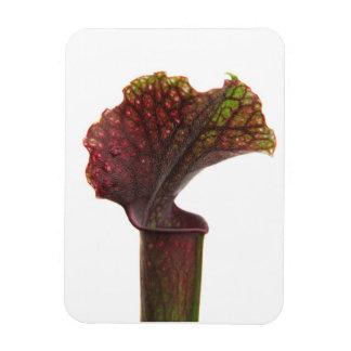 Planta de jarra rojo oscuro imanes