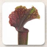 Planta de jarra rojo oscuro posavasos de bebida