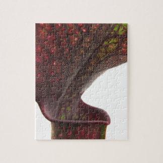 Planta de jarra rojo oscuro puzzle