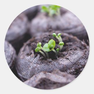 Planta de la albahaca del bebé pegatina redonda