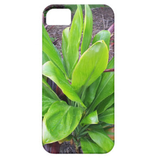 Planta de la buena suerte de Hawaii iPhone 5 Cárcasa