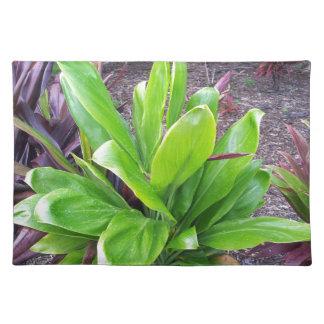 Planta de la buena suerte de Hawaii Manteles Individuales