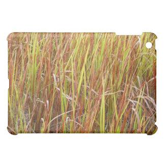 Planta de la Florida del fondo de los sawgrass de